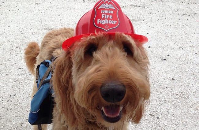 Firefighter Riley Rszd