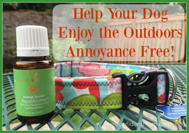 Help Your Dog Enjoy the Outdoors Annoyance Free