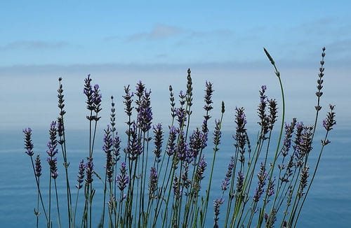 Weekly Household Quick Tip: Lavender Laundry Rinse